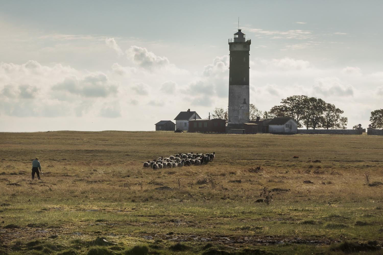 Landskap med en flock får, en fyr och en man